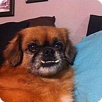 Adopt A Pet :: Debbie - Tyler, TX