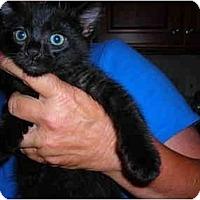 Adopt A Pet :: Krissi - Riverside, RI