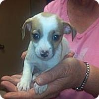 Adopt A Pet :: Cashew - Hazard, KY