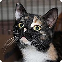 Adopt A Pet :: Tinkerbell - Westfield, MA