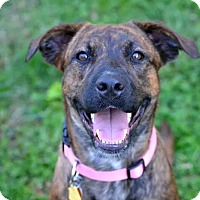 Adopt A Pet :: Mia - Fort Riley, KS