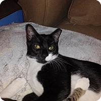 Adopt A Pet :: Benson - Miami, FL