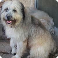 Adopt A Pet :: Rochester - Norwalk, CT