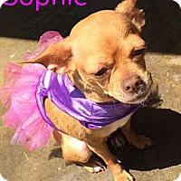 Adopt A Pet :: Sophie - Huntington Beach, CA