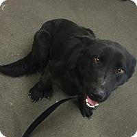 Adopt A Pet :: Junior - Rochester, NY