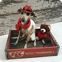Adopt A Pet :: Brody - OC - Costa Mesa, CA