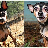Adopt A Pet :: Nancy - Forked River, NJ
