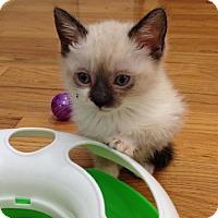 Adopt A Pet :: FLOWER - Lakewood, CA