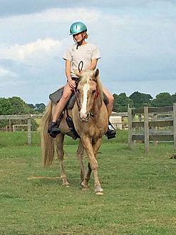 Palomino/Quarterhorse Mix for adoption in Morriston, Florida - Sophie