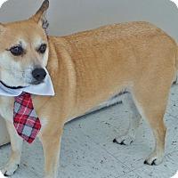 Adopt A Pet :: Oscar - Chambersburg, PA