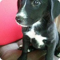 Adopt A Pet :: Ruby - Aurora, CO