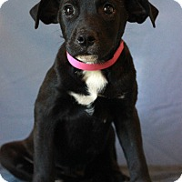 Adopt A Pet :: Prim - Waldorf, MD