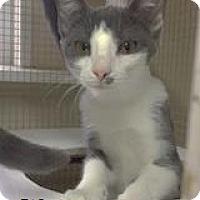 Adopt A Pet :: Sierra - Hampton, VA