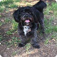 Adopt A Pet :: Scully - Monrovia, CA
