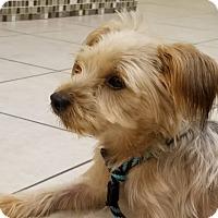 Adopt A Pet :: Homer - Ft. Lauderdale, FL