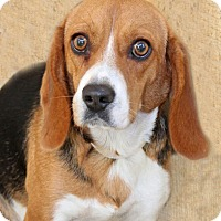 Adopt A Pet :: Hope - Encinitas, CA