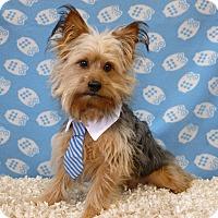 Adopt A Pet :: Bernie - Overland Park, KS