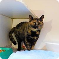 Adopt A Pet :: Lucille-123002j - Tupelo, MS