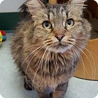Adopt A Pet :: Godiva - Colorado Springs, CO