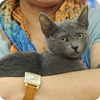 Adopt A Pet :: Mimi - Houston, TX