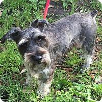Adopt A Pet :: Patterson - Spring, TX