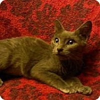 Adopt A Pet :: Grayce - San Diego, CA