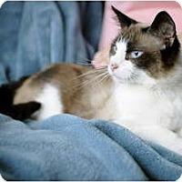 Adopt A Pet :: Sage - Columbus, OH
