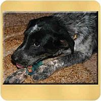 Adopt A Pet :: Cami - Scottsdale, AZ