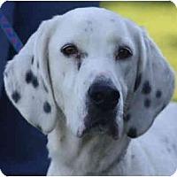 Adopt A Pet :: Reed - PENDING - kennebunkport, ME