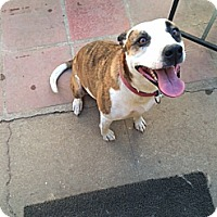 Adopt A Pet :: Kanani - Monrovia, CA