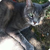 Adopt A Pet :: Jack - Corbin, VA