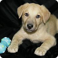 Adopt A Pet :: Riley - Lufkin, TX