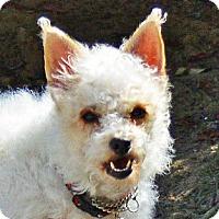 Adopt A Pet :: Patches - San Jose, CA