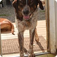 Adopt A Pet :: Dan - Bakersville, NC