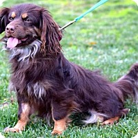Adopt A Pet :: Liesel - Penngrove, CA