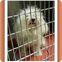 Adopt A Pet :: Adopted!!Paloma - IL - Tulsa, OK