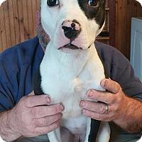 Adopt A Pet :: Twister - Eastpointe, MI
