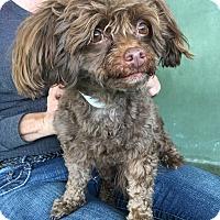Adopt A Pet :: Fuzzy - Van Nuys, CA