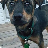 Adopt A Pet :: Brinley - Bowie, MD