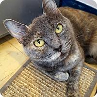 Adopt A Pet :: Lyanna - Salisbury, MA