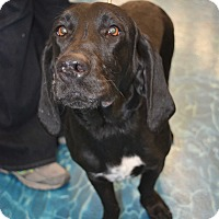 Adopt A Pet :: Presley - Ogden, UT