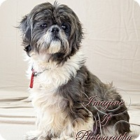 Adopt A Pet :: Hershel - Oklahoma City, OK