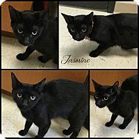 Adopt A Pet :: Jasmine - Joliet, IL