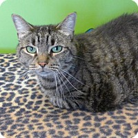 Adopt A Pet :: Amber 33627967 - Westampton, NJ