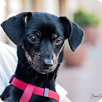 Adopt A Pet :: Casey - San Marcos, CA