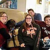 Basset Hound/Catahoula Leopard Dog Mix Dog for adoption in Northville, Michigan - zRonan -ADOPTED