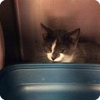 Adopt A Pet :: Master Splinter - Janesville, WI