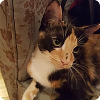 Adopt A Pet :: Chita - Huntsville, AL