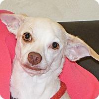 Adopt A Pet :: Peanut - Spokane, WA