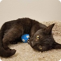 Adopt A Pet :: Noir - Colonial Heights, VA